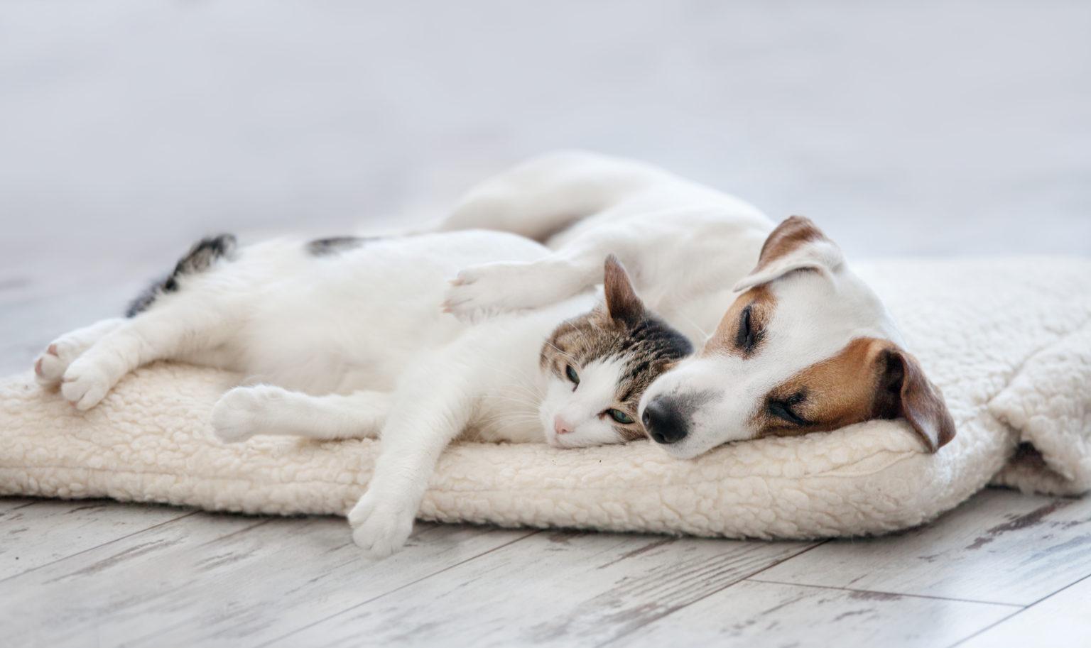 Sarasota Veterinary